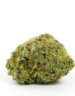 buy-weed-online-green-ganja-house-strain-Bay Eleven