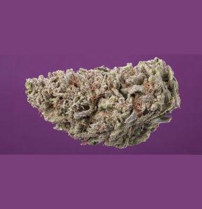 buy-pink-gas-cannabis-strain_buy-weed-online_on-green-ganja-house