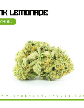 pink-lemonade-cannabis-strain_buy-weed-online_on-green-ganja-house