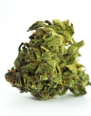 buy-weed-online-Animal-Cookies-Marijuana-Strain-green-ganja-house