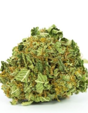 buy-Face-off-Og-Marijuana-Strain-buy-weed-online-green-ganja-house