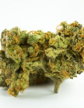 buy-Gorilla-Cookies-Marijuana-Strain-buy-weed-online-green-ganja-house