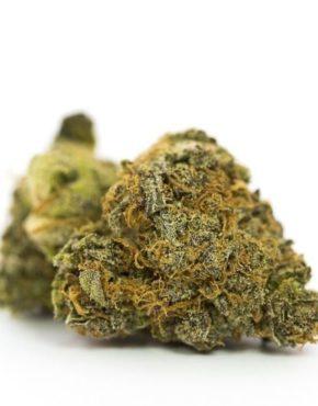 buy-Gorilla-Glue-Marijuana-Strain-buy-weed-online-green-ganja-house