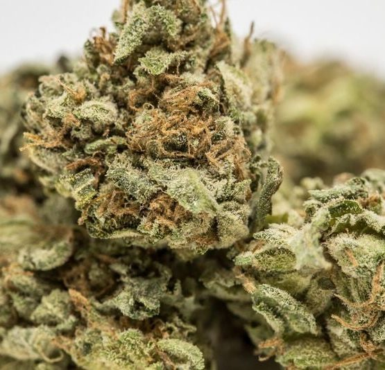 buy-Rockstar-Marijuana-Strain-buy-weed-online-green-ganja-house