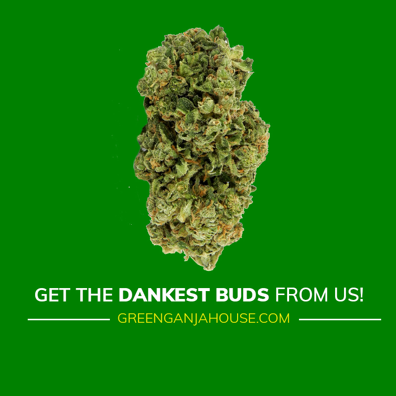 GET-THE-DANKEST-BUDS-FROM-GREEN-GANJA-HOUSE-BUY-WEED-ONLINE