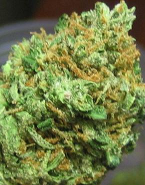 buy-Hawaiian-snow-green-ganja-house-buy-weed-online