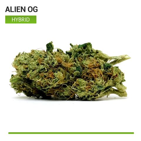 alien-OG-top-shelf-hybrid-strain-cannabis_buy-weed-online_on-green-ganja-house