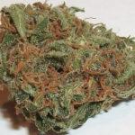 buy-weed-online-Grapefruit-green-ganja-house