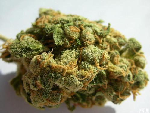 buy-weed-online-Jack-the-Ripper-green-ganja-house