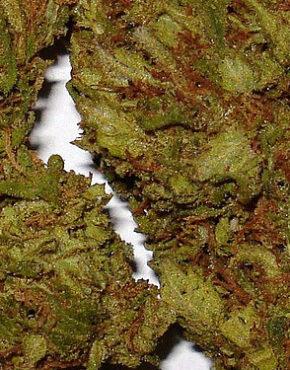 buy-weed-online-Pineapple-Kush-green-ganja-house
