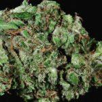 buy-weed-online-ak-47-green-ganja-house