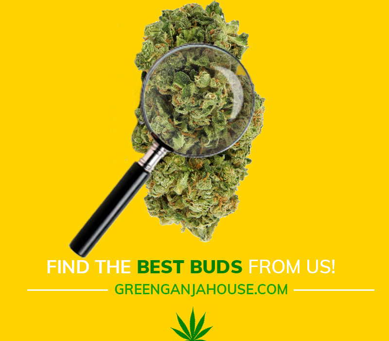 find-the-best-buds-on-green-ganja-house