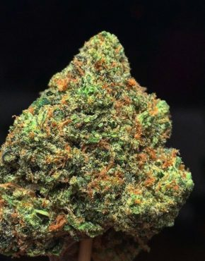 girl-scout-cookies-buy-weed-online-green-ganja-house-worldwide-marijuana-delivery