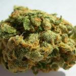 buy-jack-herer-green-ganja-house-buy-weed-online