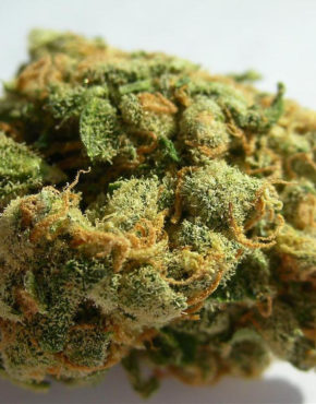 buy-jack-herer-green-ganja-house-buy-weed-online