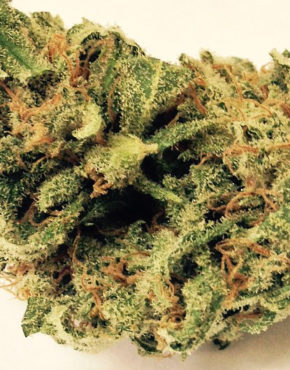 buy-lemon-kush-buy-weed-online-green-ganja-house