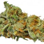 buy-lemon-skunk-buy-weed-online-green-ganja-house-worldwide-marijuana-delivery