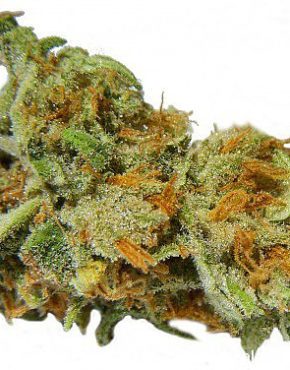 buy-lemon-skunk-buy-weed-online-green-ganja-house-worldwide-marijuana-delivery