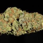 buy-mobi-dick-buy-weed-online-green-ganja-house-worldwide-marijuana-delivery