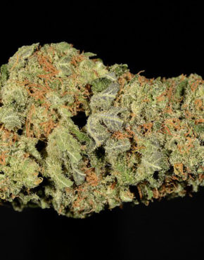 buy-mobi-dick-buy-weed-online-green-ganja-house-worldwide-marijuana-delivery