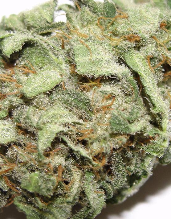 buy-white-rhino-green-ganja-house-buy-weed-online