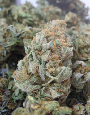 white-widow-buy-weed-online-green-ganja-house